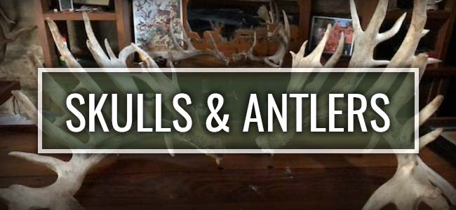Still Waters Ranch Skulls & Antlers
